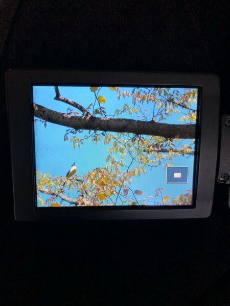 昨日、山梨市のハーブ園の梢に留まっていた小鳥です。名前がわかりません。どなたかお分かりでしたら教えていただきたく存じます。