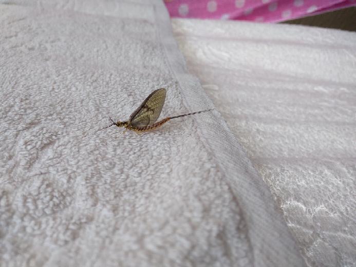 この虫初めて見たんですが、なんの虫かわかる方いらっしゃいますか?