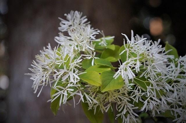③ 栃木の羽黒山で見かけた花です。 名前を教えて下さい。 宜しくお願いします。