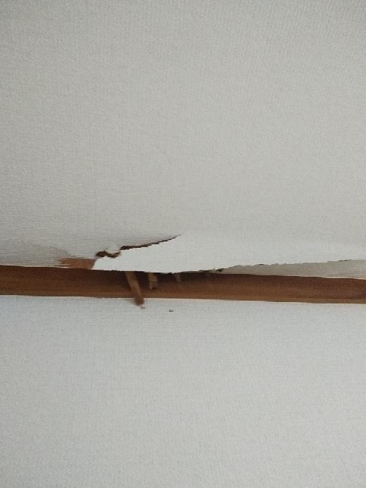 築年数がめちゃくちゃ古い一戸建てを借りてます。急に天井に穴が空きました(汗) 天井でイタチか?何かの動物がたまに走り回ってたんですが、天井を突き破るなんてことありますかね?中から竹製のものが飛び出てきてます