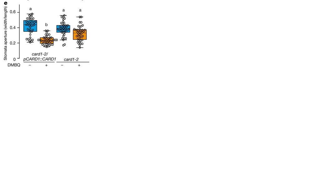 ggplot で以下のような形のグラフを作成したいと考えているんですが, 横軸のラベルの設定方法がわかりません。 x軸の目盛に文字や線を追加するコードを教えていただけたら幸いです。