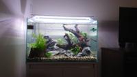 水槽のエアレーションについて教えてください! 60cm水槽を立ち上げてそろそろ1週間になります。 現在はテトラを12匹。 その後はもう少しお魚とヌマエビが増えると思います。  植物はナナなどの陰性植物を入れて...