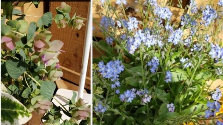 こちらの右と左の花の名前を教えて下さいm(_ _)m