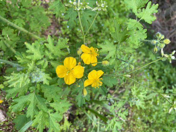 この花は何という花ですか?