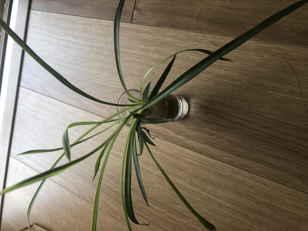 この植物はなんだと思いますか? バイト先の人にいただきましたが、種類がわからないそうです。