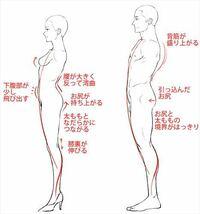女性は男性と比べて、下腹部が飛び出ているのは何故ですか? 斜めからのアングルだと特に腹筋(?)の部分の形がそのままアウトラインになるほどでている時がありますよね。