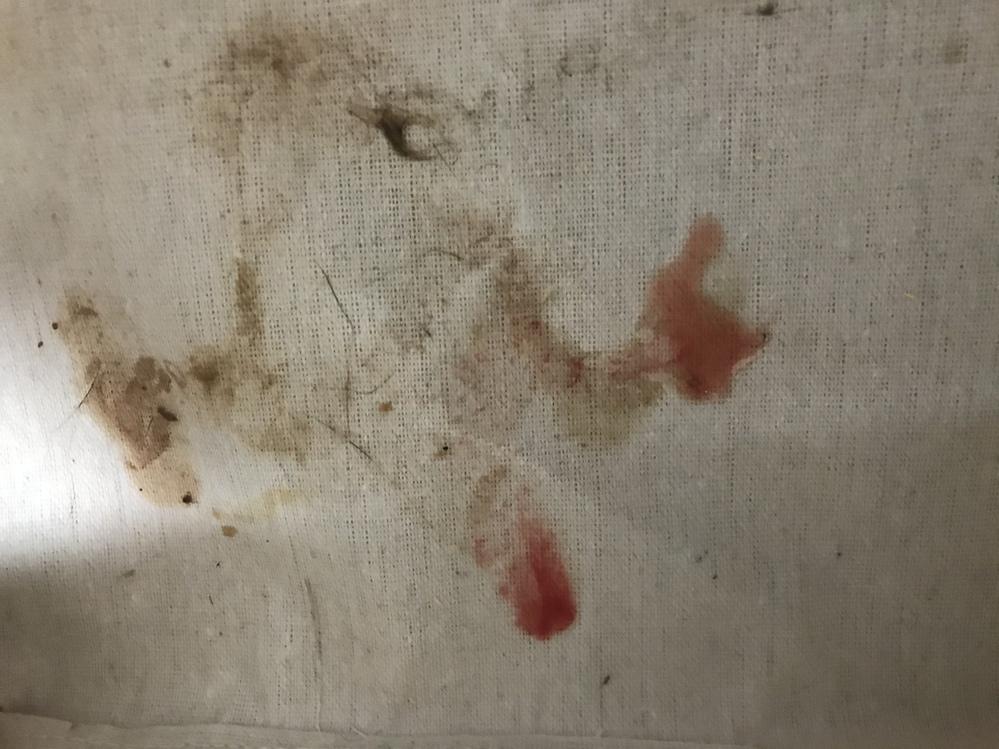 私の飼っている猫が決まった場所に 時々、血を吐いています。 若しくは血便?? 獣医に連れて行きましたが、胃が荒れてるだけじゃないかとの事で、パッとせず 治る気がしません。 どなたか同じ様な経験された方、いらっしゃいませんか?? またアドバイスを頂ければ助かります。 写真添付します。 ※血が写ってるので苦手な方は見るのはご遠慮ください。
