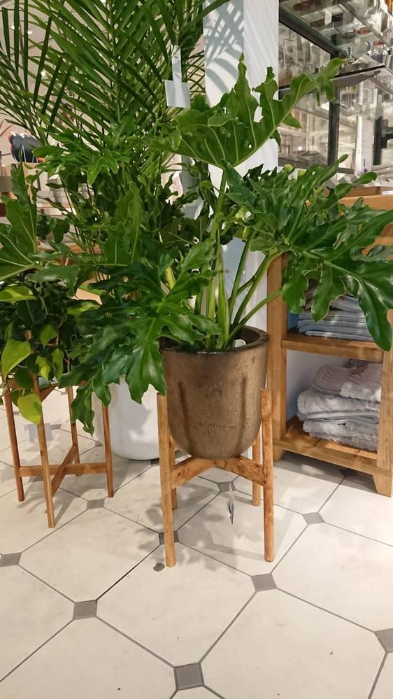 お店で見かけた観葉植物ですが、メモをするのを忘れてしまい、名前がわかりません。。 なんという植物でしょうか?