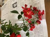 この花の名前が分かりません。 教えて下さいm(_ _)m (棘がありバラ科だと思うます)
