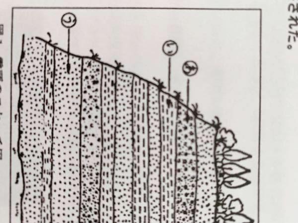 化学についてです ① 地層ウは堆積岩で出来ていることが分かった。 ②岩石の表面を顕微鏡で観察するとフズリナの化石が観察された。 ③この岩石に希塩酸をかけると、二酸化炭素の発泡を生じた。 →この古生物を含むウの地層が堆積形成された地質時代名はなにか →①.②の特徴からウの地層の堆積岩名はなにか 次の授業の参考にしたいので教えてください
