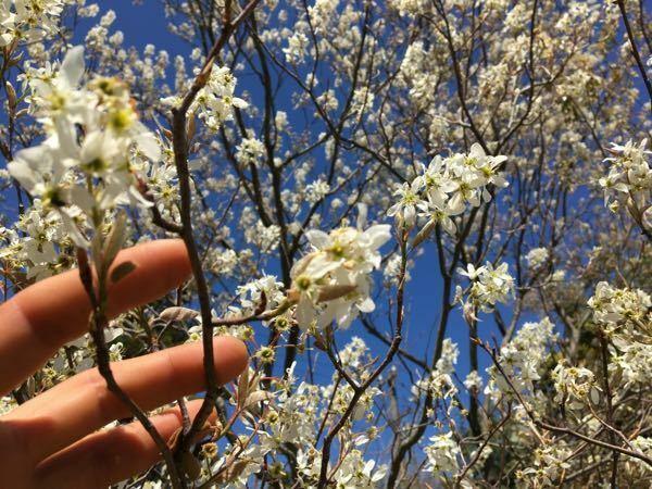 3月ごろ咲いていた花です。 この花木の名前を教えてください。
