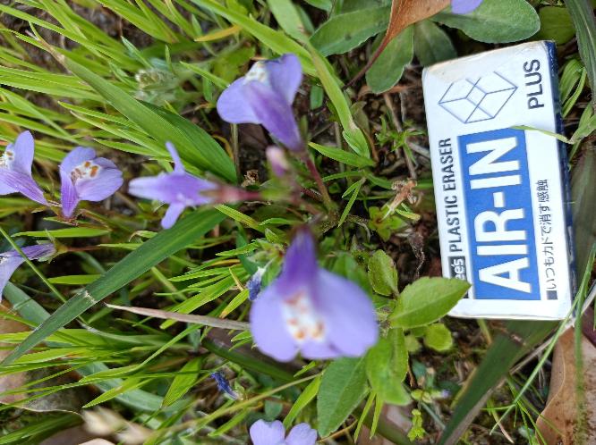 この花の名前をご存じの方 教えて下さい下さい!!
