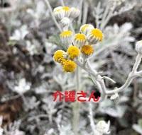 この花の名前は何ですか? 撮影場所は兵庫県で撮影日時は2021年4月29日です。 よろしくお願いします。