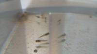グッピー稚魚のハリ病 何だこれは…  水換えしてブラインシュリンプを与えて、ホッと一息ついていたら、みんな底の方にじっとしているので あれっ?と思ってよく見てみたら  ひっくり返って死んでいたり、ヨロヨロ泳いで明らかに弱っています。そしてみんな尾鰭が尖っていました。  ハリ病を初めて見たのでショックです… 水換えのせいでしょうか?
