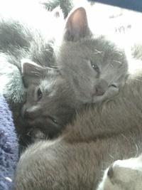 猫ちゃんはかわいいですが、  やはり(ΦωΦ)  可愛さ余って 可愛さ1720兆倍ですか?