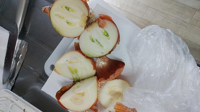 玉ねぎを切ったら画像のようになってました。 しばらく冷蔵庫の野菜室にいれたままで根もでてきてます。 食べれますでしょうか。