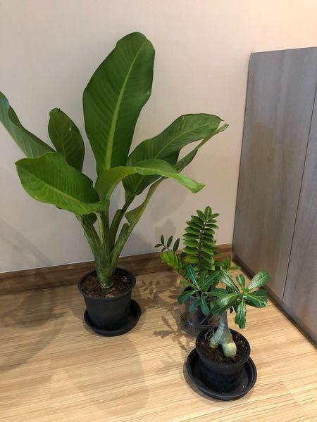 3種類。観葉植物の名前を教えて下さい