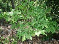 この低木の名前は何でしょうか?