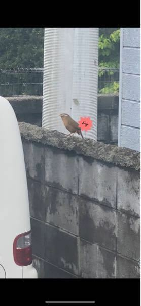 この鳥は何という名前の鳥ですか? 昨日から我が家の車に向かって鳴きに来ています。 カカカカカーッと聞こえたので見てみたら車のガラスを高速でつついたりしています。 これがキツツキなのかと思い調べてみると、違う生き物の様です。 どなたか知っている方がいれば教えて下さい。
