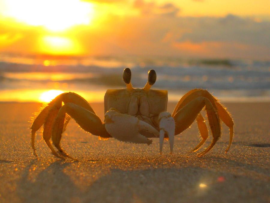 この蟹の名前を教えて下さい