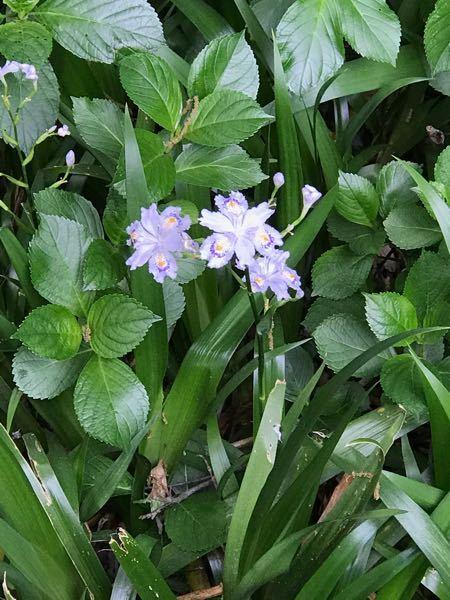 この花の名前は何ですか? 高尾山にいました