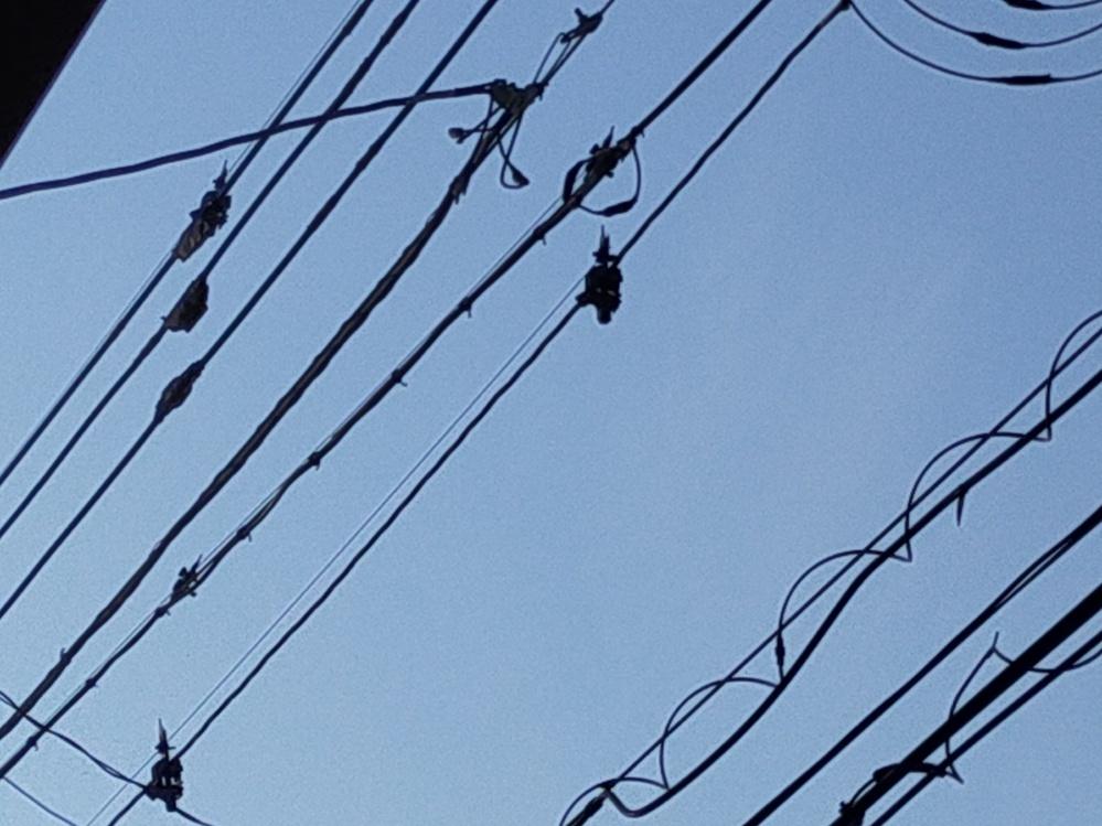 この電線は鳥対策はされていますか?