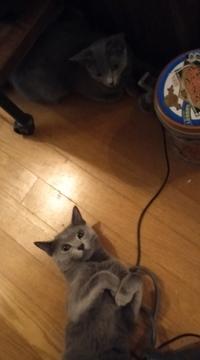 オス猫がメス猫に何かアピールしているんですが どういう状況ですか?
