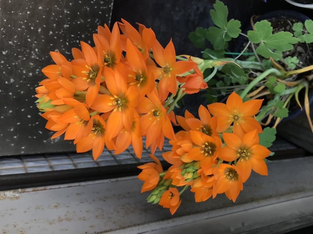 この花はなんという名前でしょうか?