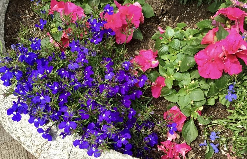 この紫色の花と赤ぽい花の名前を教えてください。