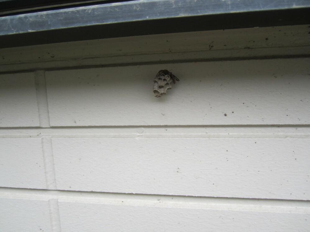 ハチが巣作りを始めたようです。巣の大きさは、2~3cmぐらいです。まだ本当に小さいです。どのように駆除したらいいでしょうか。 お知らせください。よろしくお願いします。
