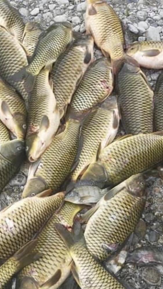 この魚は何ですか?あと食用としてはどうですか?