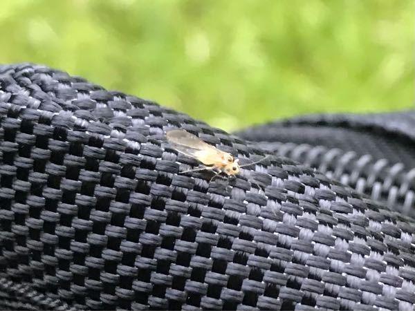 これなんて虫だか分かりますか?