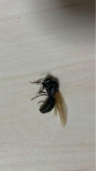 家にいました。3センチくらいです。なんの虫ですか?