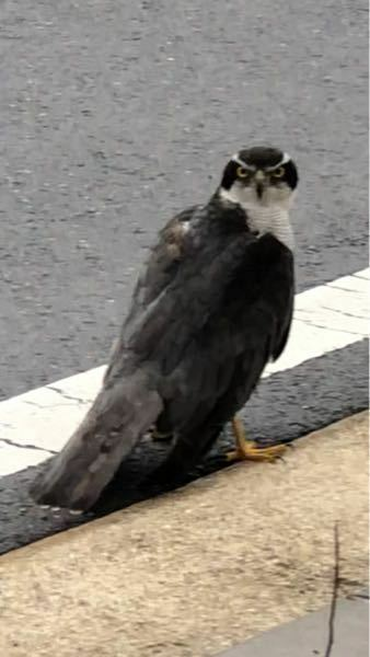 この鳥はなんという鳥ですか?