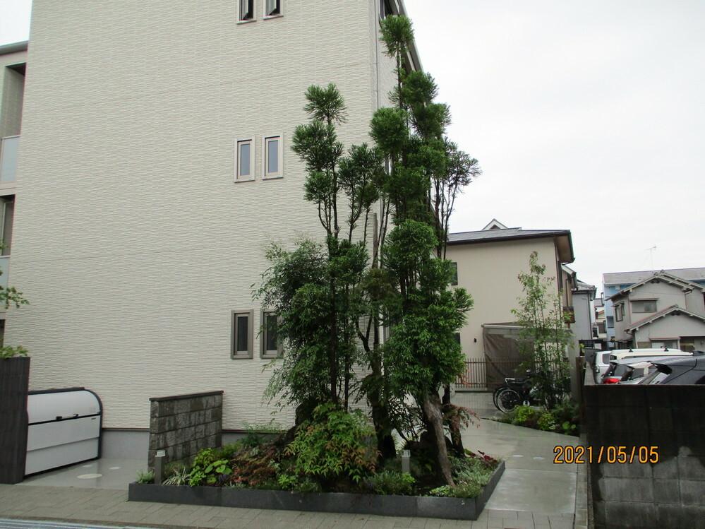 全体像としてはこんな樹形(画像3回目)です。何という樹が分かるかたがいれば教えてください。