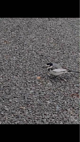 この鳥の名前教えて欲しいです