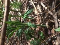 この植物の名前がわかる方、いらっしゃいますでしょうか?