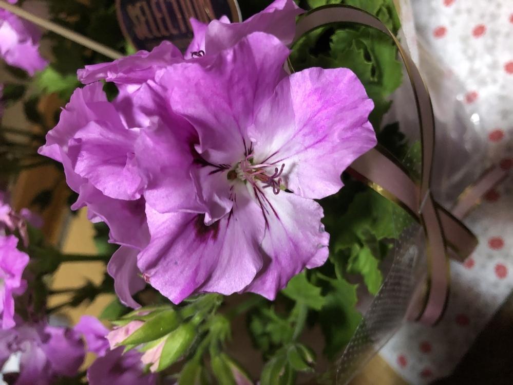 この花ってカーネーションじゃないんですか?