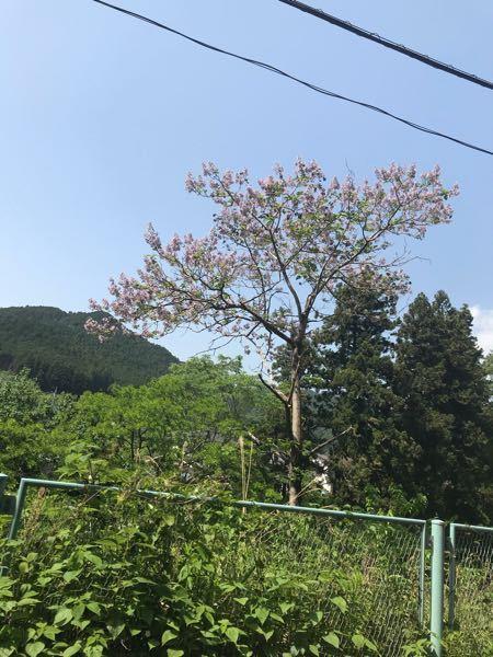 この木は何の木ですか?