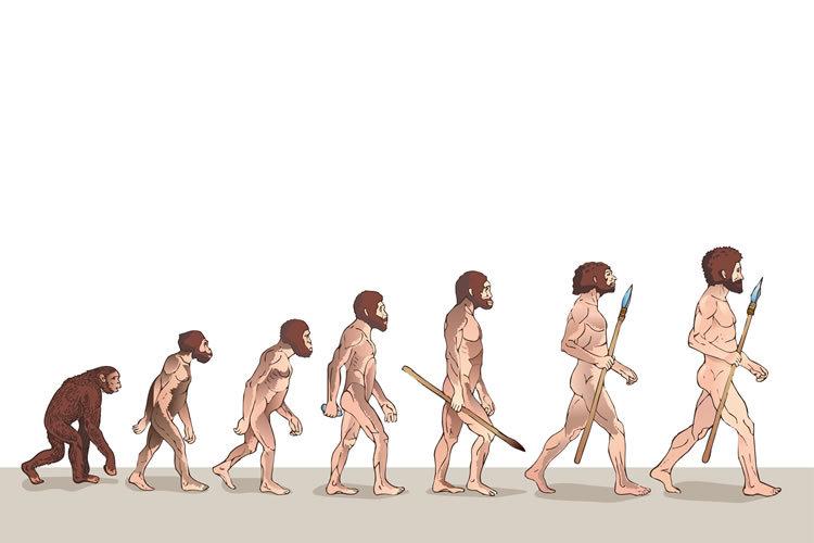 昔の小学校の歴史の教科書の数ページ目には、必ず画像のようなイラストが「人類の進化の過程」と題されて載っていたのですが、 その後見なくなりました。何か理由があるのですか?
