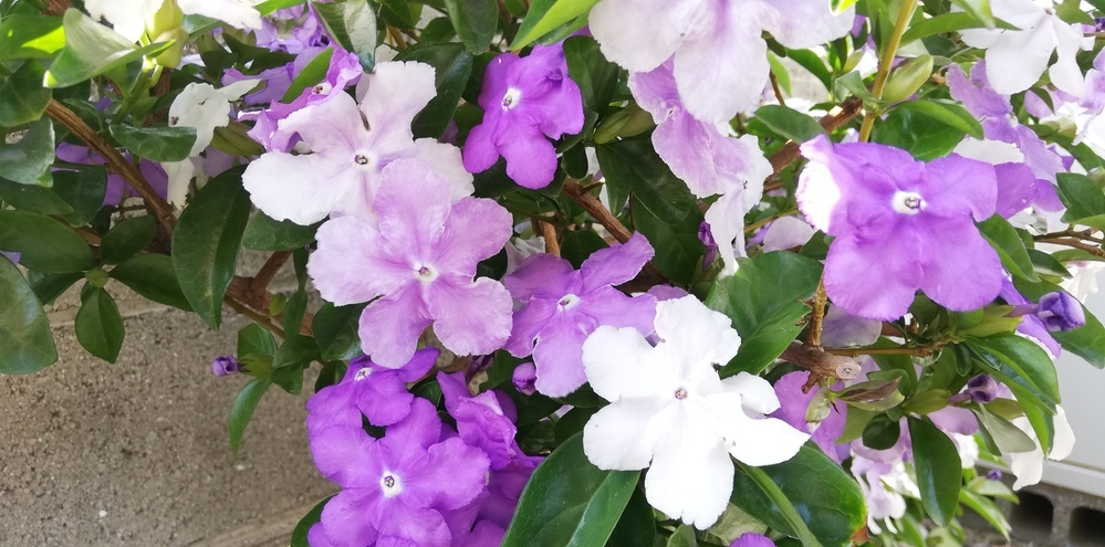 この花は何という名前ですか。