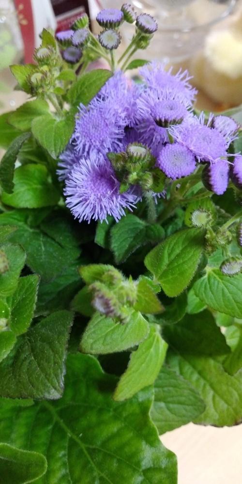 この花の名前を教えて下さい! よろしくお願いします!