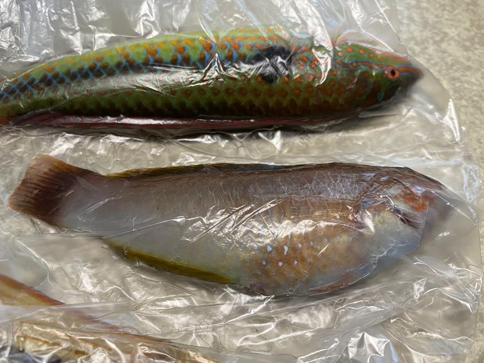 この魚なんですか? 食べれますか?