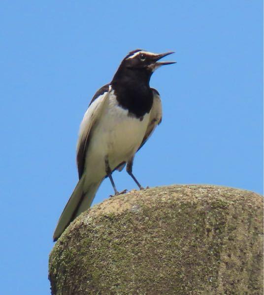 鳥の種類 写真の鳥について 種類が分かる方、ご教示ください。 本日佐賀県で撮影したものです。