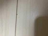茶色いゴキブリが家に出たのですがスプレーで殺した後、壁や色々なところにめっちゃ小さい黒い物が付いていたり落ちたりしています。 これは卵でしょうか糞なのでしょうか? また卵だった場合の駆除はどうすれば良いのでしょうか?