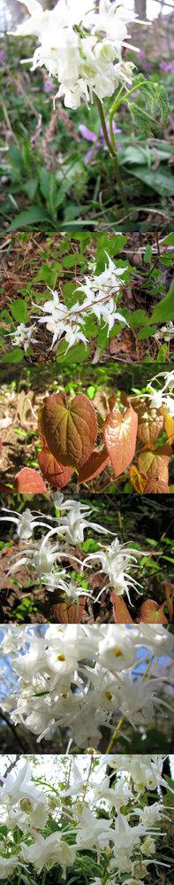 新型コロナウイルス蔓延という事で、結構 皆さん山(登山)や草原(キャンプ)など山野に行っているそうですが、 僕もカメラ片手に行ってみました。 画像 ↓ はそこ(山)で撮った写真です。 花は、白い別の生き物のような? 面白い形をしています。何という名前の植物でしょうか??