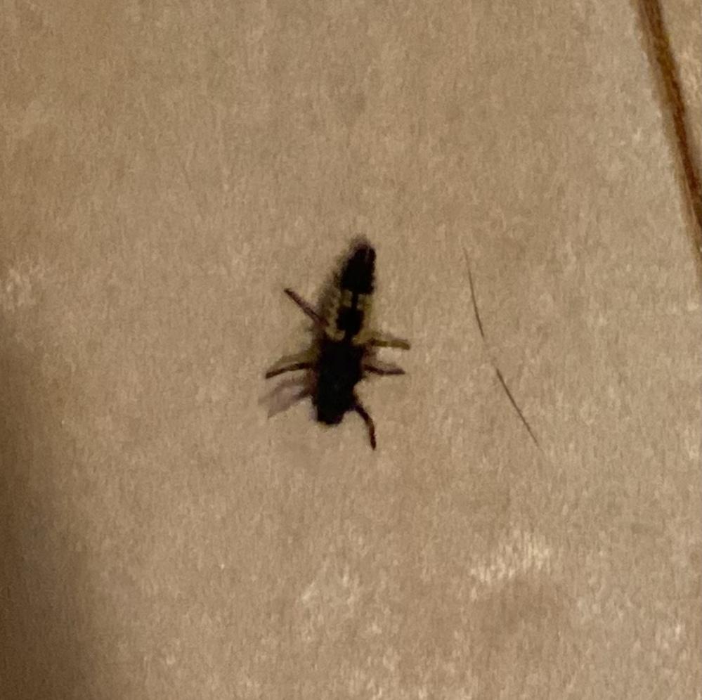 この虫は何だか分かるからいらっしゃいますか? 家の中の廊下にいたのですが...