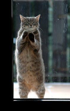 (-o-)/ 【猫画像】ちょっと、中に入れてもらえないでしょうか