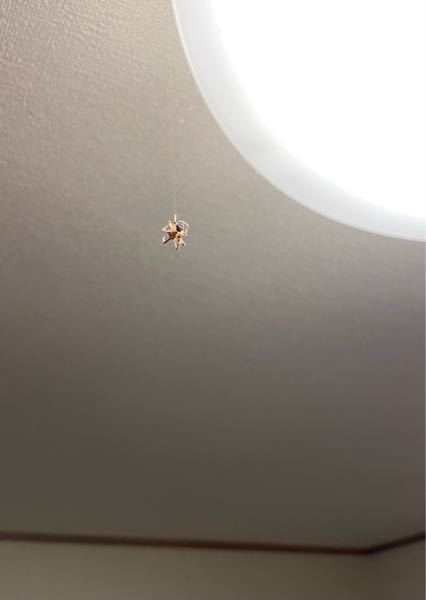 この蜘蛛とシェアハウスしてるんですけど放置しといても大丈夫ですか?