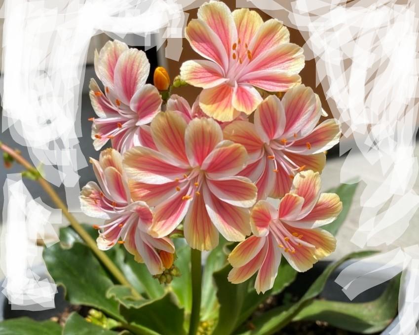 この花の名前を教えてくださいませんか?宜しくお願い致します。